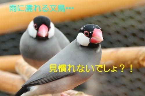 110_20160920183019612.jpg
