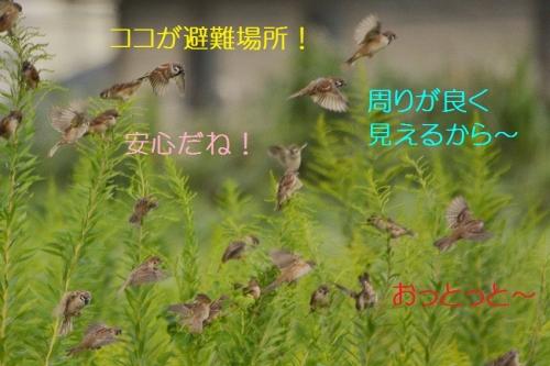 110_20161010130653859.jpg