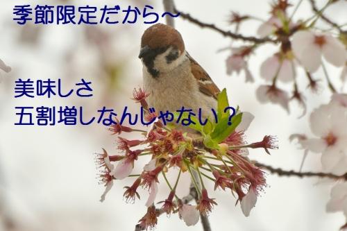 120_20160412183337bbf.jpg