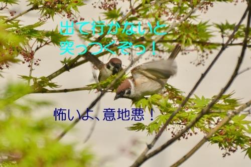 120_20160419185933e72.jpg
