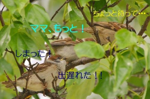 120_20160511211450636.jpg