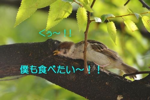 120_20160615194843af7.jpg