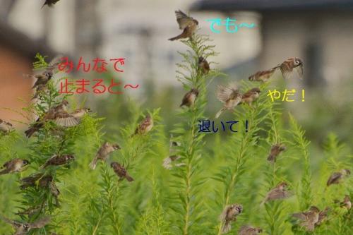 120_201610101306540ea.jpg