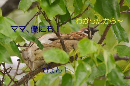 130_201605112114510c6.jpg