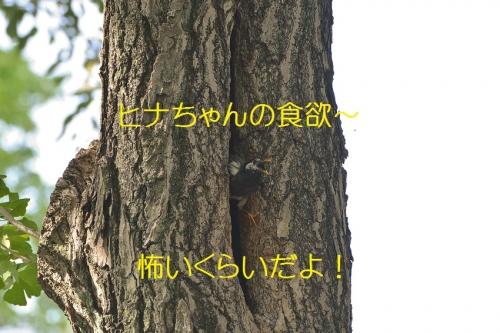 130_201606051942334c4.jpg