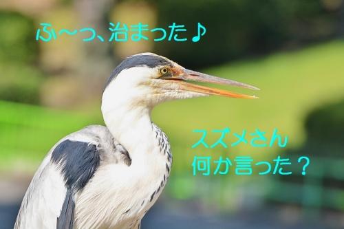 130_201607201943141bf.jpg