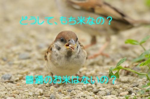 130_2016080122002645a.jpg