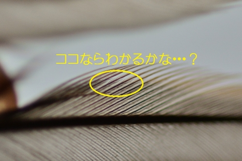 140_201605290012346e2.jpg