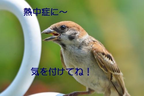 140_20160704210213123.jpg