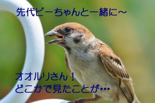 140_20160816192249550.jpg