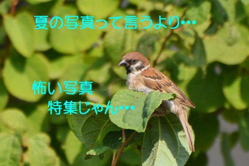 150_20160823194243076.jpg