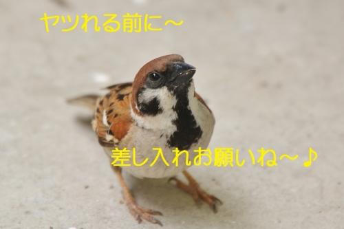 170_20160617205648e90.jpg