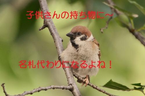 190_2016081619241337b.jpg
