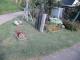 芝生と花壇