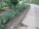 ペチュニアを植える予定の場所