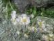 氷漬けになった花