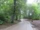 森林の散策路
