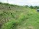 刈られた土手の草