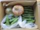 マイスターの野菜