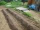 タマネギの苗床と大根の種を蒔いた畝