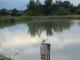 池の赤トンボ