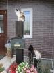 玄関のネコ達