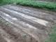 中央の2列の畝に野沢菜の種