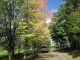 カツラの木の紅葉