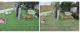 芝生花壇の草刈り前後