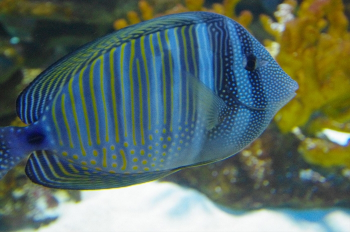 ツーオーシャンズ水族館 (4)