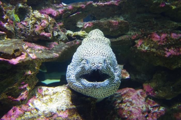 ツーオーシャンズ水族館 (19)