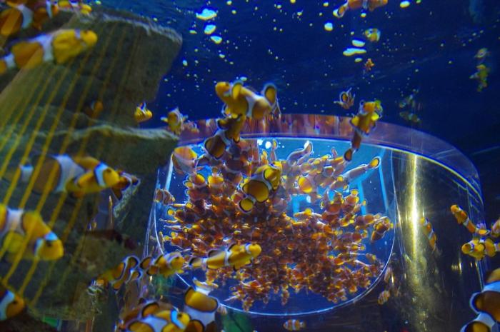 ツーオーシャンズ水族館 (28)