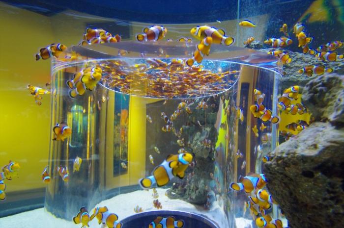 ツーオーシャンズ水族館 (23)