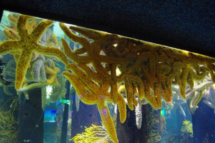 ツーオーシャンズ水族館 (46)