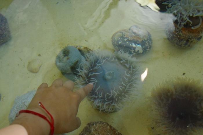 ツーオーシャンズ水族館 (62)