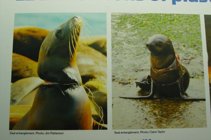ツーオーシャンズ水族館 (66)