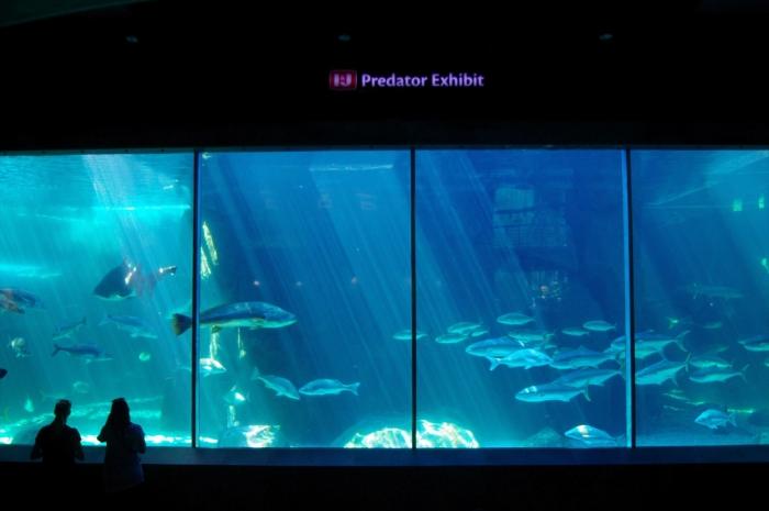 ツーオーシャンズ水族館 (109)