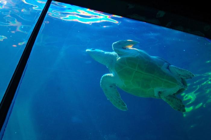 ツーオーシャンズ水族館 (112)