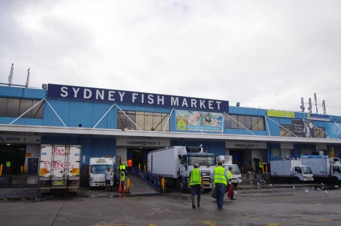シドニーフィッシュマーケット (1)