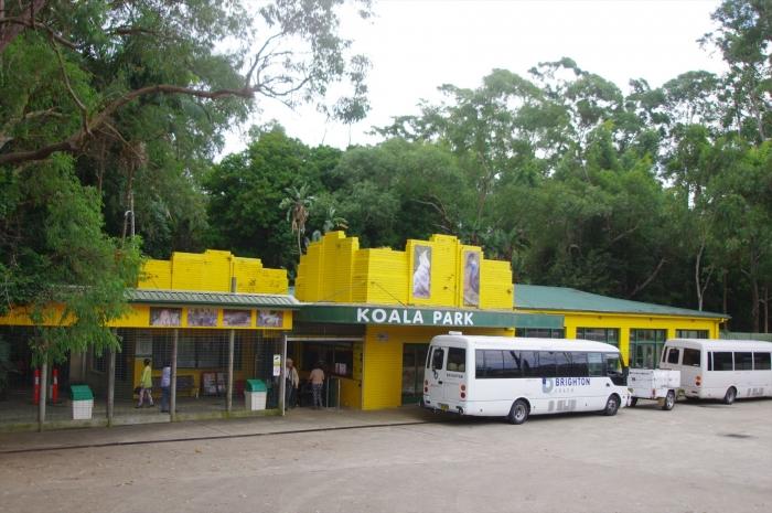 コアラパーク (2)