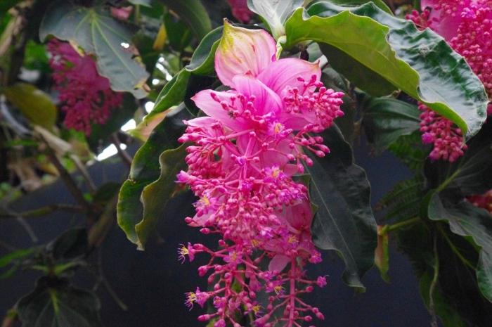 シンガポール植物園 (8)