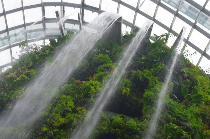 シンガポール植物園 (13)