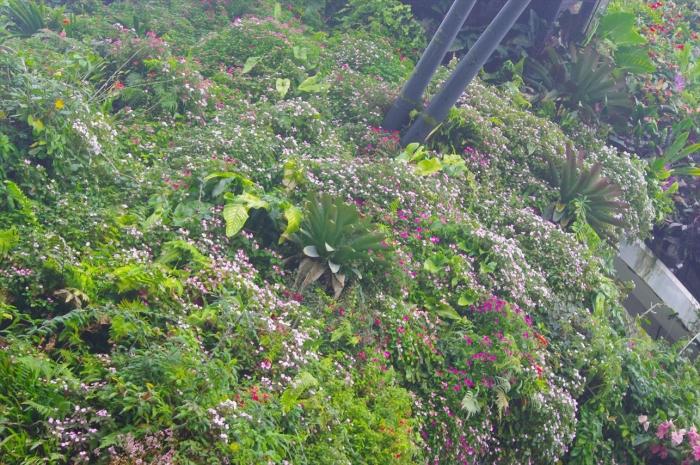 シンガポール植物園 (16)