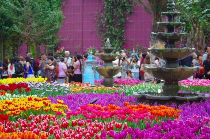シンガポール植物園 (67)