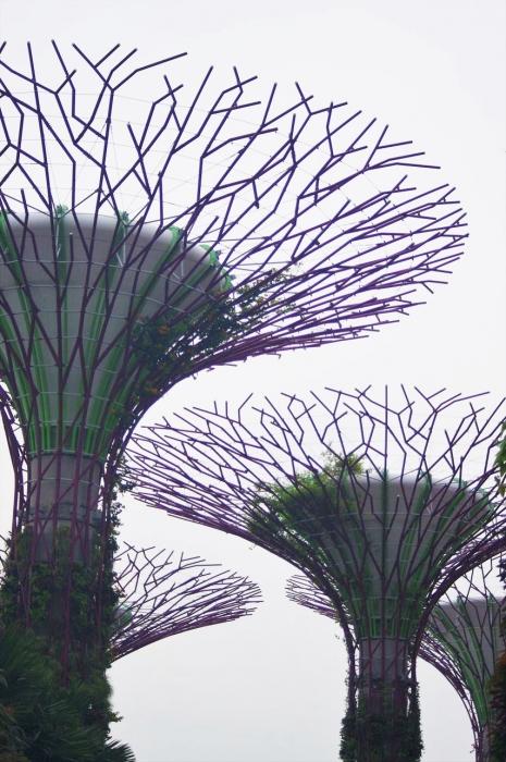 シンガポール植物園 (73)