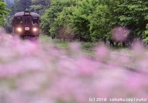DSC_7151c_01.jpg