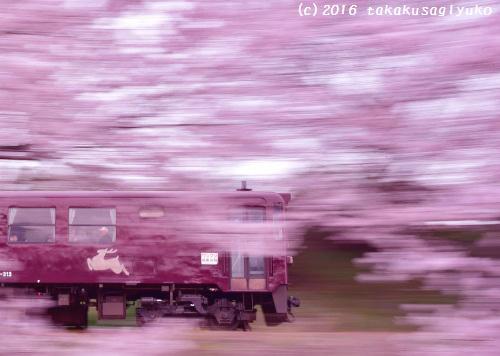 DSC_9141c_01.jpg