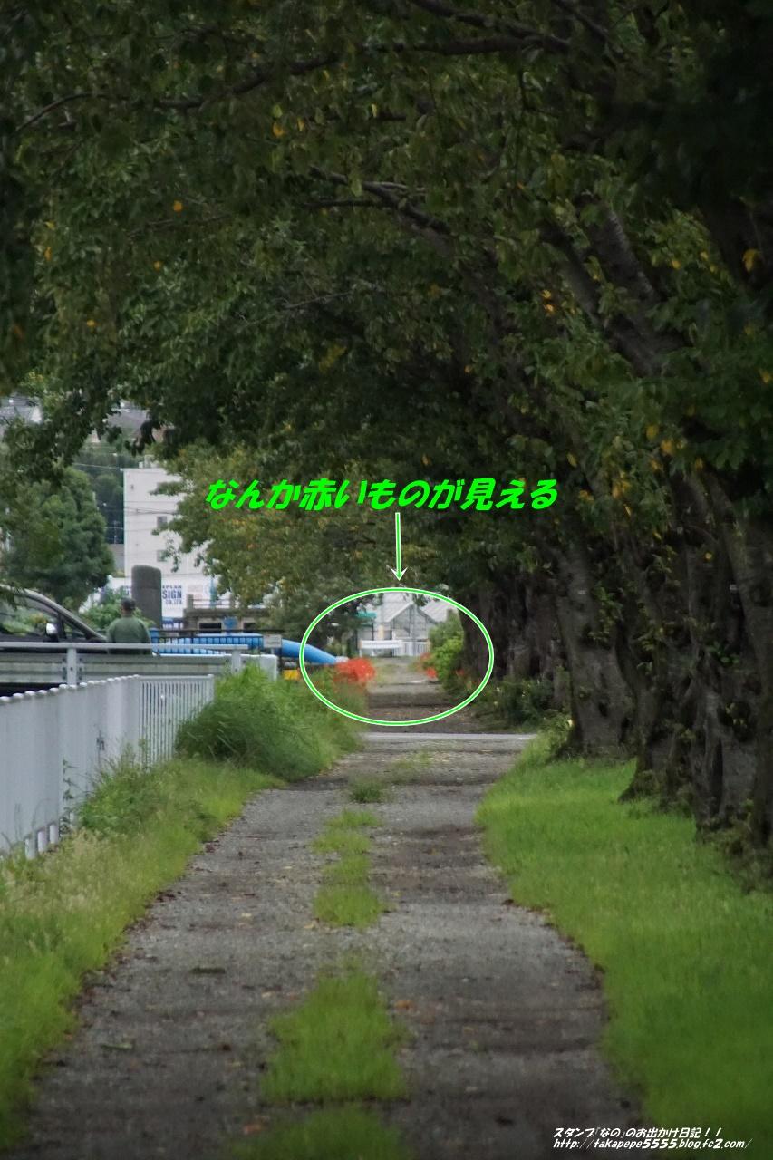 s-DSC00119.jpg