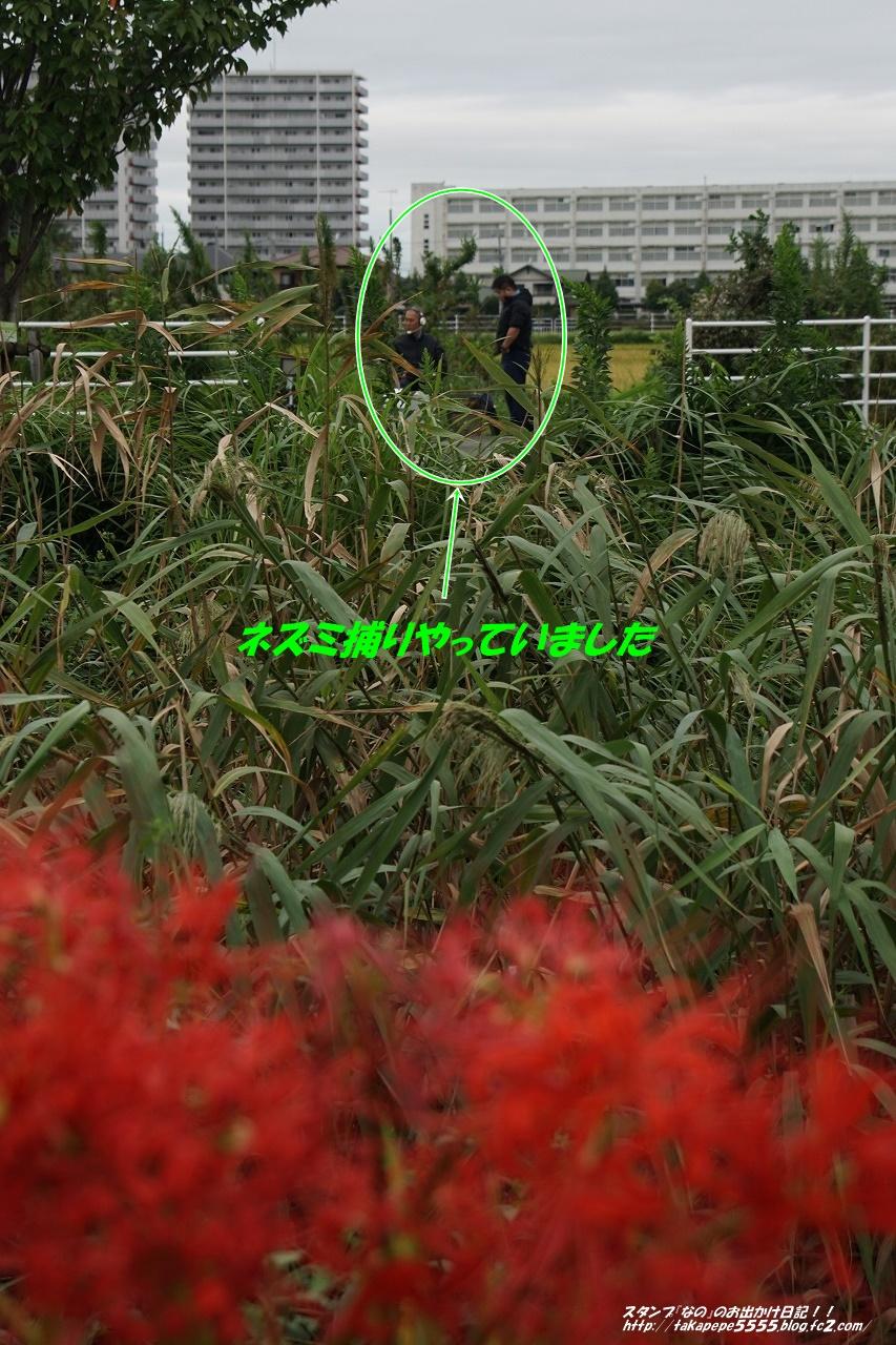 s-DSC00132.jpg