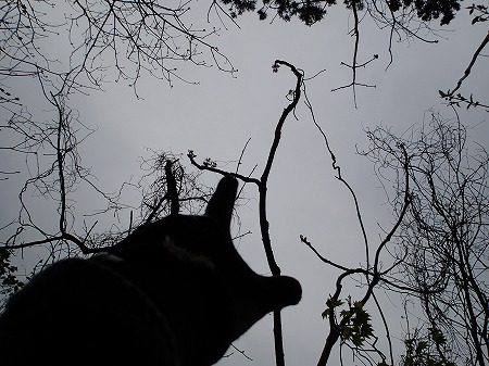 タラの大木